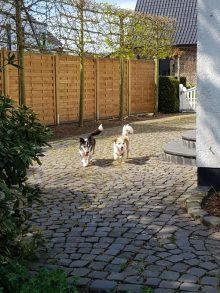 Sofie und Bari erkunden ihr neues Reich :)