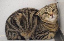 Wer erkennt diese Katze? Update: Die Katze wurde vom Besitzer abgeholt
