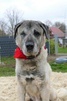 Alte Tierheimhunde von der Steuer befreit!